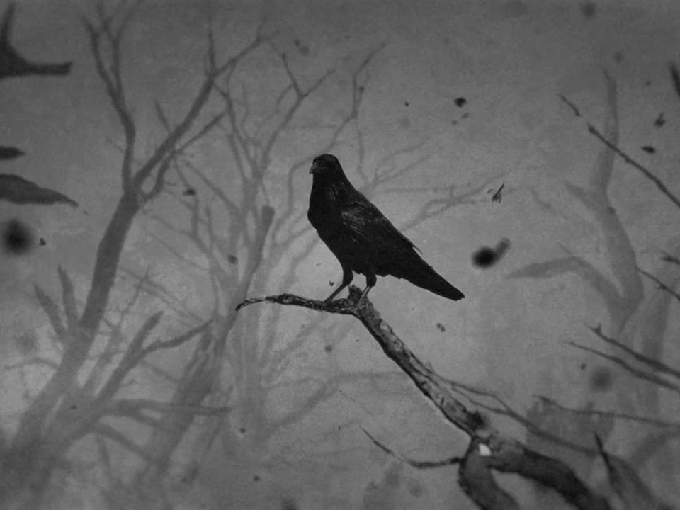 Noire Crow